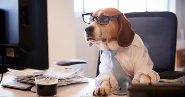 ダウの犬投資法とは?売買手法と指数とのパフォーマンスについて解説